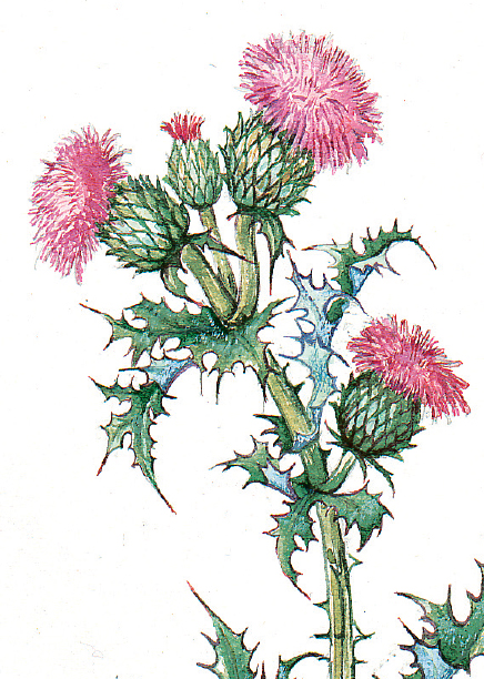Thistle Flower Of Scotland Stationery Gifts